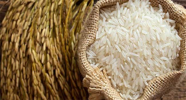 rizs magok